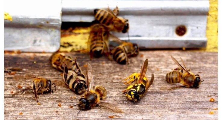 Россельхознадзор будет контролировать использование на полях пестицидов