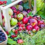 В Новосибирской области развивают сады в Кыштымском районе