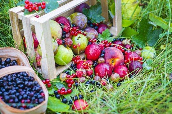В Кыштыьских садах сделают мелиорацию и лесополосы