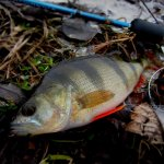 В Россрыболовстве рассматривают возможность введения патентов для рыбаков-индивидуалов