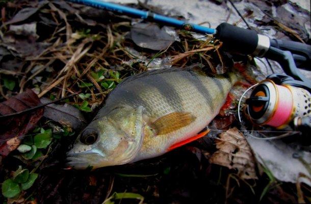 Для рыбаков одиночек могут ввести патенты