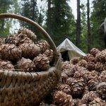 В правительстве Томской области нашли способ поднять доход малоимущих граждан