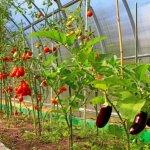 В Северной Осетии аграриям для производства овощей закрытого грунта предоставят бесплатные теплицы