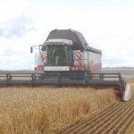В компании «Агропромкомплектация» завершают уборку озимых культур