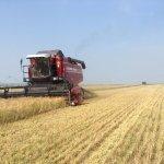 Агрохолдинг «Продимекс» полностью убрал зерновые на территории Воронежской области
