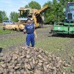 Липецкие аграрии рассчитывают получить более 5 миллионов тонн свеклы