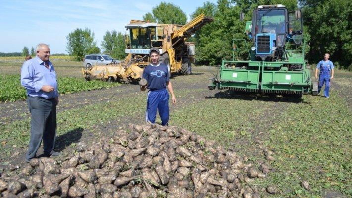 В Липецкой области ожидают рекордный урожай сахарной свеклы