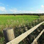 Вологодский гектар предоставляться в собственность будет бесплатно