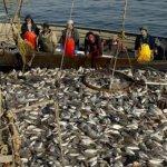 В Мурманске начал действовать новый завод по переработке рыбы