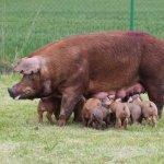 В Брянской области агрохолдинг «ОХОТНО» продолжает строительство свиноводческого комплекса