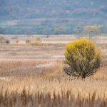 В Хабаровском крае власти выделяют сельхозпроизводителям  новые земли