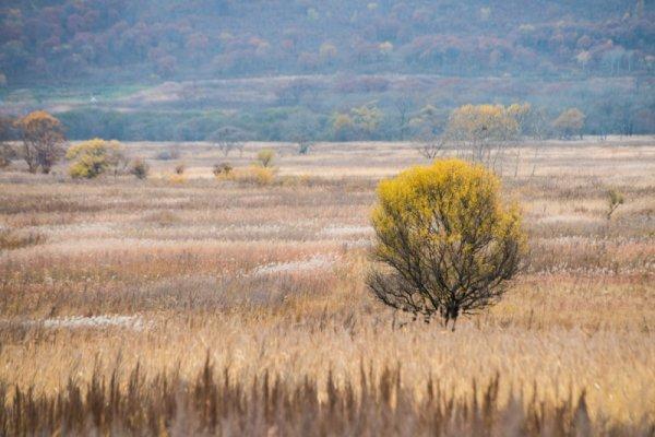 Бесхозные земли Хабаровскогокрая будут передавать крупным сельхозпроизводителям