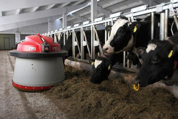 В Удмуртии активно строятся роботизированные фермы