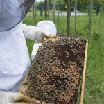 В Липецкой области нашли виновников массовой гибели пчел