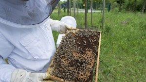 В Липецкой области выявлены виновники массовой гибели пчел