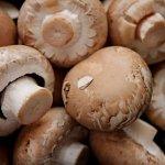 В городе Электросталь Московской области строится грибная ферма