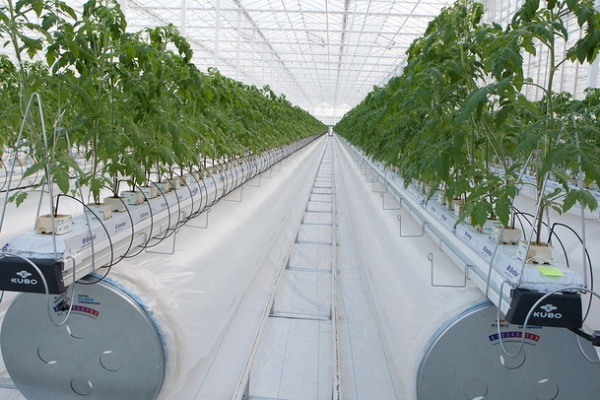 В Краснодаре на международной конференции проходит обсуждение актуальных вопросов по внедрению инновационных технологий для тепличного производства овощей
