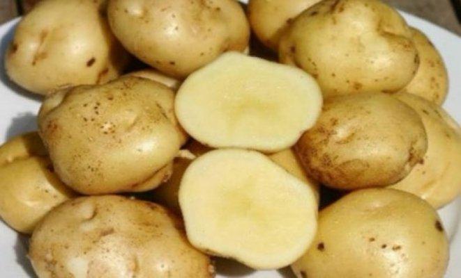 В Тамбовской области будут производить собственные семена картофеля