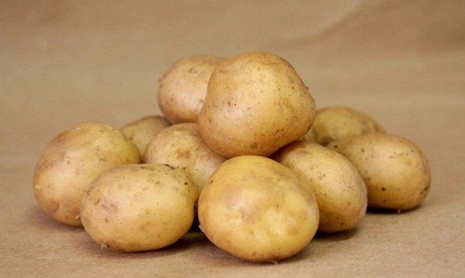 Студенты северо-осетинского вуза вывели новые сорта картофеля