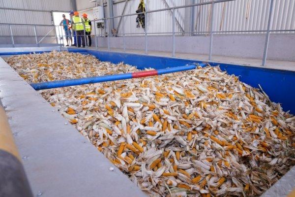 В Солнечнодольске Ставропольского края открылся завод по выпуску семян