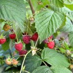 В Мамадышском районе Республики Татарстан открылся фермерский  плодопитомник