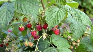 В Татарстане появился фермерский плодопитомник и очередной сельхозкооператив