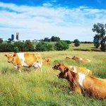 Животноводам Краснодарского края снизят стоимость аренды сельскохозяйственных земель