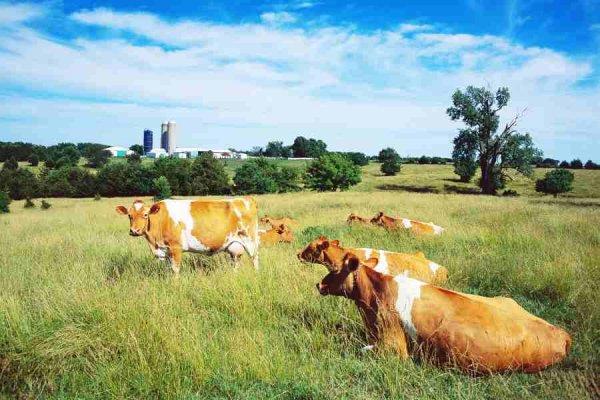 На Кубани животноводам снизят стоимость аренды пастбищ и сенокосных угодий