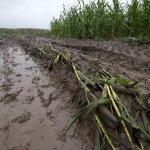 Почему аграрии Удмуртии отказываются от агрострахования