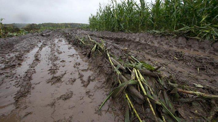 Аграрии Удмуртии могут не получить компенсацию за погибшие посевы