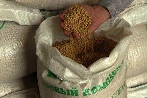 Под Воронежом появится завод по производству семян масличных культур