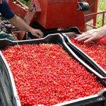 В Ярославской области открыли новый заготовительный пункт