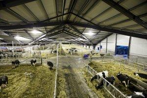 Животноводы УКдмуртии перенимают опыт датских фермеров