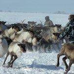 В Республике Тыва возрождают оленеводство