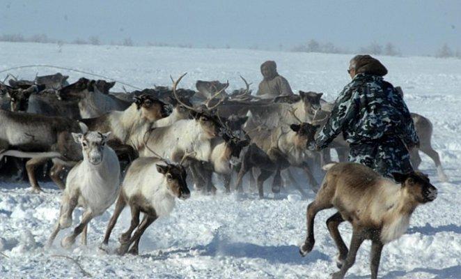 В Тыве создают фермерские оленеводческие хозяйства