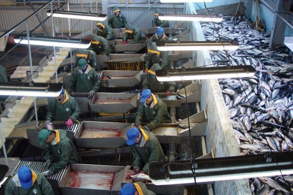 На Камчатке начал работу новый современный завод по переработке рыбы