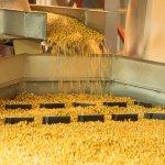 В Республике Крым ввели в эксплуатацию первую очередь семенного завода