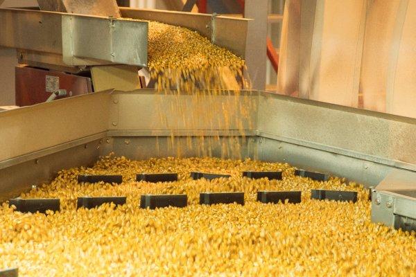 В Крыму начал работать новый семенной завод