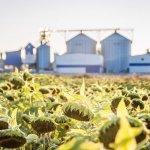 В Волгоградской области появится завод элитных семян сельскохозяйственных культур