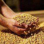 В Амурской области вводят в эксплуатацию вторую очередь соевого завода