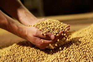 В Белогорске Амурской области запущено производство соевого изолята