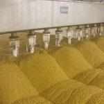 В Самарской области компания «Зерно Жизни» начала строительство второй очереди завода по очистке семян