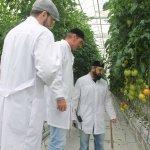В Чеченской Республике ввели в эксплуатацию вторую очередь тепличного комплекса компании «ТК ЮгАгроХолдинг»