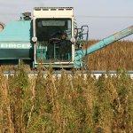 В Солнечногорске создается комплекс по выращиванию и переработке технической конопли