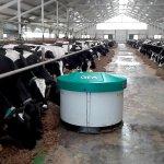 В Кировской области увеличивают производство молока