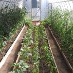 В фермерском хозяйстве Липецкой области появилась современная евротеплица