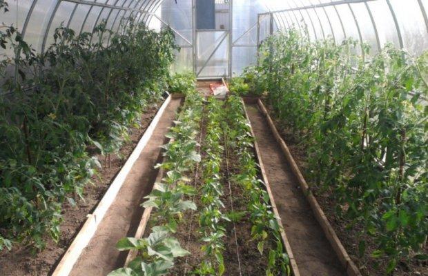 Фермер из Лебедяни Липецкой области построила современную теплицу
