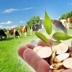 Министерство сельского хозяйства России изменяет условия предоставления грантов для фермерских семей