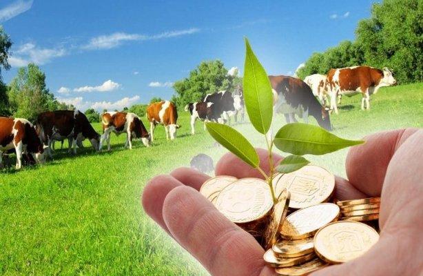 Минсельхоз России изменяет условия предоставления грантов для мелких фермеров