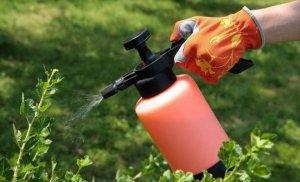 Ученые Крыма создали новый инсектицид